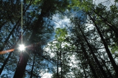 purdon-canopy-1